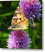 Painted Lady -vanessa Cardu Metal Print by Bill Tiepelman