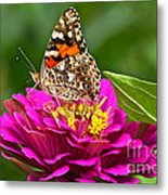 Painted Lady With Zinnia Metal Print