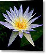 Painted Lily And Pads Metal Print