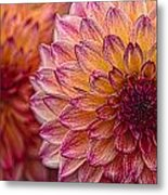 Painted Stacked Dahlias Metal Print