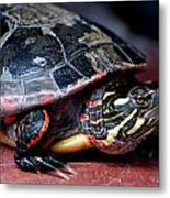 Painted Turtle Michigan Metal Print