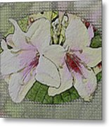 Painted Weigela Window Metal Print