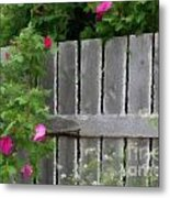 Painterly Fence And Roses Metal Print