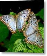 Pair Of Butterflies Metal Print