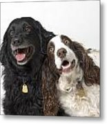 Pair Of Canine Friends Metal Print