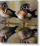 Pair Of Wild Birds Metal Print