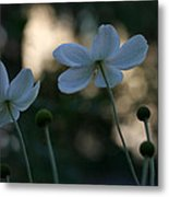 Pale Beauties Metal Print