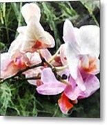Pale Pink Phalaenopsis Orchids Metal Print