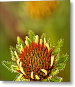 Pale Purple Coneflower Bud Metal Print
