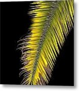 Palm Frond Against Black Metal Print