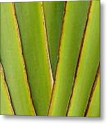 Palm Frond Detail Metal Print