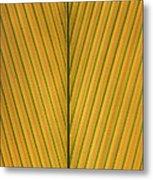 Palm Leaf Showing Midrib And Veination Metal Print