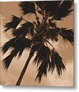 Palm Tree Leeward Oahu Metal Print
