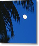 Palm Tree Silhouetted Against The Sky Metal Print