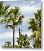 Palm Trees In Spain Metal Print