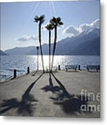 Palm Trees With Shadows Metal Print