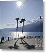 Palm Trees With Shadows On The Lakefront Metal Print