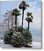 Palm Trees With Snow Metal Print