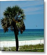 Palmetto And The Beach Metal Print