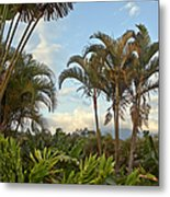 Palms In Costa Rica Metal Print