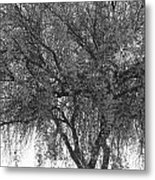 Palo Verde Tree 2 Metal Print