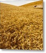 Palouse Wheat Metal Print