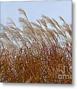 Pampas Grass In The Wind 1 Metal Print
