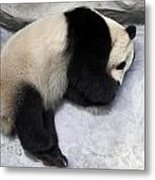 Panda Paws Metal Print