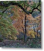 Panorama Of Fall Colors At Lost Maples Metal Print