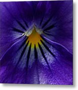 Pansy Abstract Metal Print