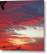 Papaya Colored Sunset With Geese Metal Print