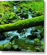 Paradise Of Mossy Logs And Slow Water   Metal Print