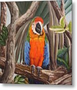 Parrot At New Orleans Zoo Metal Print