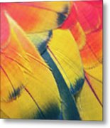Parrot Feathers Metal Print