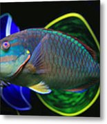 Parrot Fish With Glass Art Metal Print