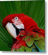 Parrot Head Metal Print