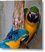 Parrot Talk Metal Print