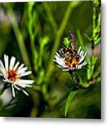 Party Flower 2 Metal Print