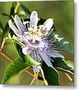 Passion Flower - May Pop Bloom Metal Print
