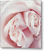 Passion For Flowers. One Rose Two Hearts Metal Print