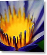 Passion Is Energy Metal Print