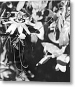 Passionflower And Tendrils Metal Print