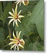 Passionflower Metal Print by Archie Young