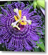 Passionflower Purple Metal Print