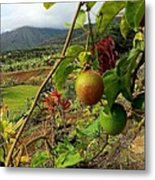 Passionfruit On The Vine With A View Of The Valley   Maui Metal Print by J R Stern