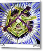 Passion's Fly Metal Print