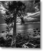 Past Roots Metal Print