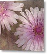 Pastel Pink Passion Metal Print