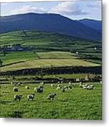 Pastoral Scene Near Anascual, Dingle Metal Print