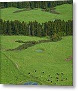 Pastures In Azores Islands Metal Print